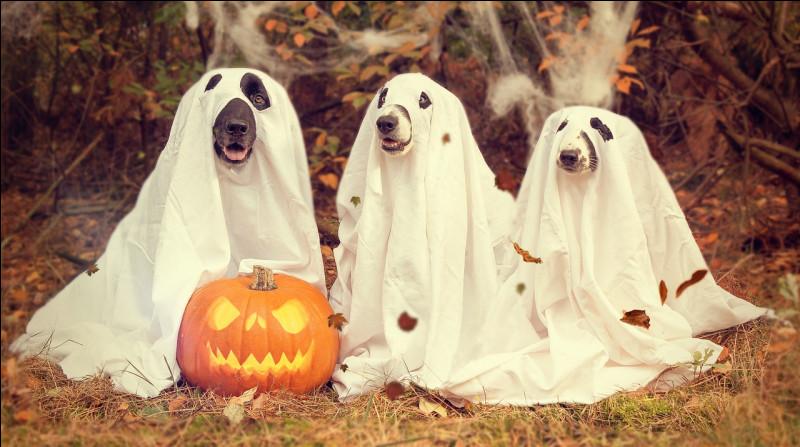 Les animaux ont le droit de fêter Halloween :
