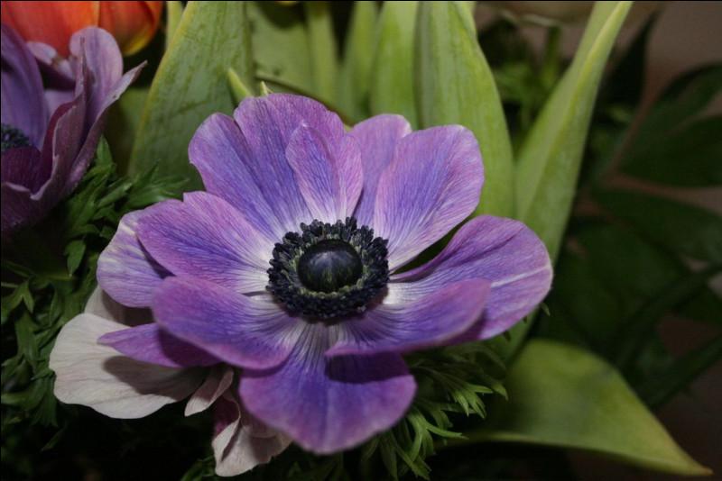 Quelle fleur apercevons-nous ici ?