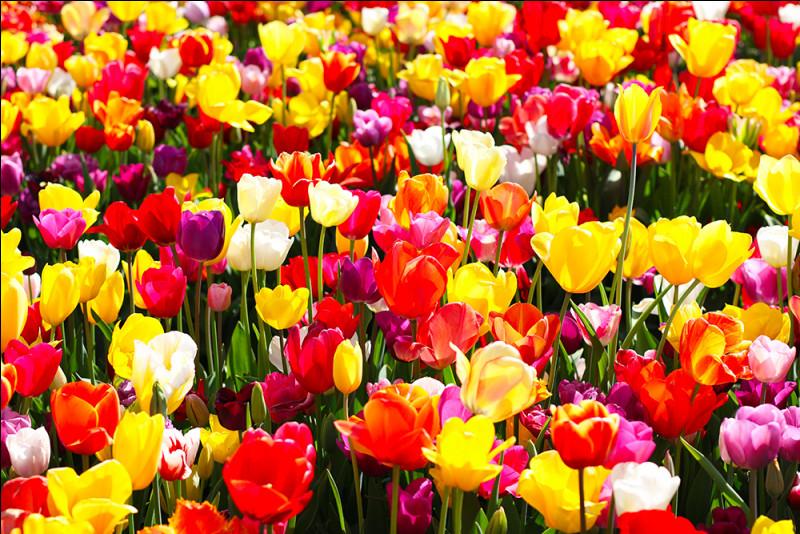 Pour ce Gérard, c'est différent, il adore les fleurs !