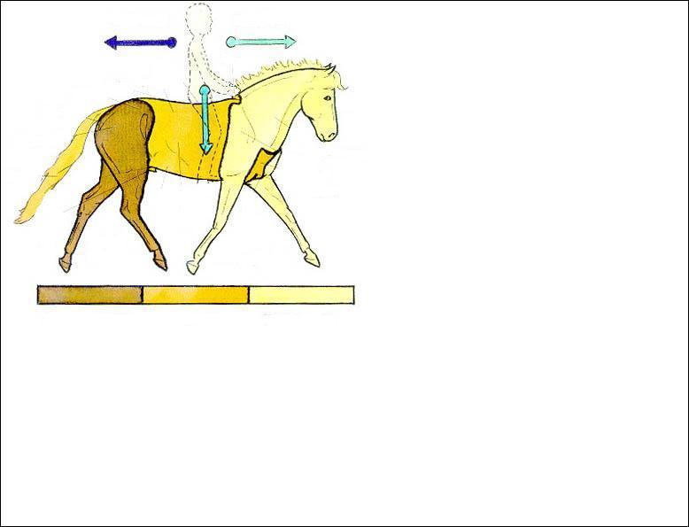 Quelles sont les trois parties extérieures du cheval ou du poney ?