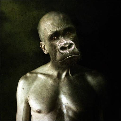 Habitants de l'île de Pithécuse, près de la Sicile, Zeus les métamorphosa, dit-on, en singe pour les punir de l'avoir raillé. Qui sont-ils ?