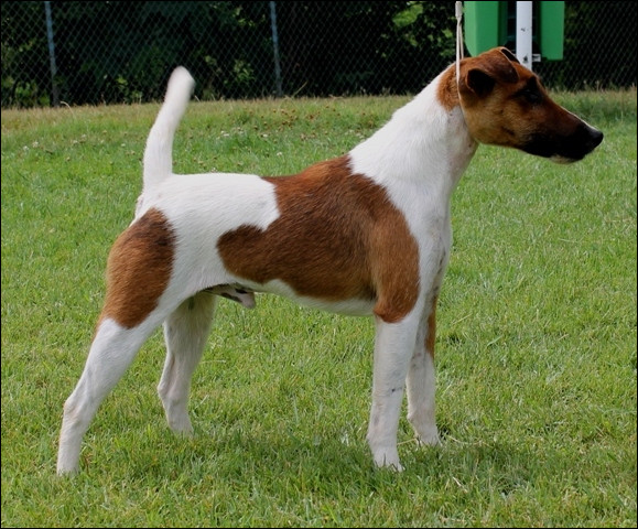 Quelle race de chien est représentée sur l'image ?