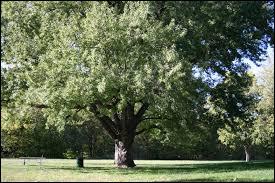 Quel est le nom de cet arbre ?