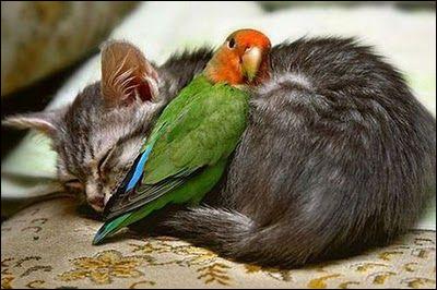 Un instant de paix en amour n'est jamais qu'une ... !