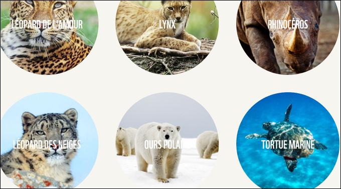 Quelle espèce est en voie de disparition à travers le monde ?
