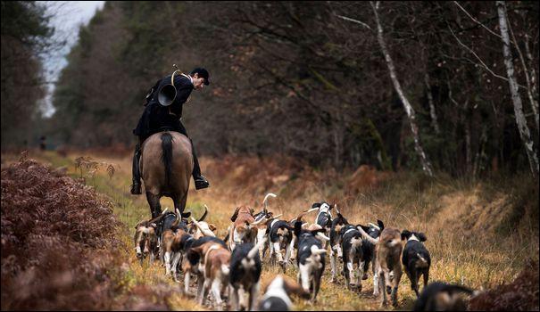 Quel animal peut-on chasser au cours de la chasse à courre en France ?