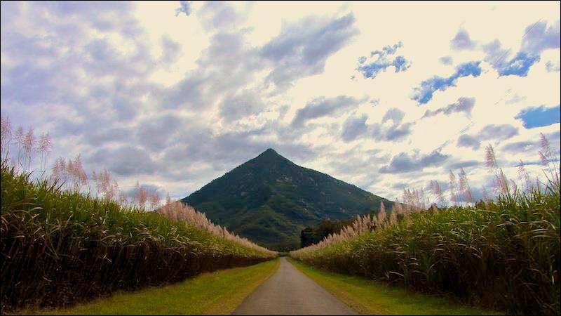 La pyramide à terrasses de Gympie (Australie) ne fait que 30 m, mais au niveau des conjectures, ça vole beaucoup plus haut ! (Choisissez la bonne !)