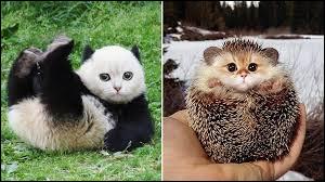 Quel est ton animal préféré ? (2)