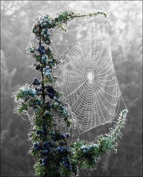 Et enfin, d'après le proverbe, quand faut-il rencontrer une araignée pour qu'elle soit symbole d'espoir ?