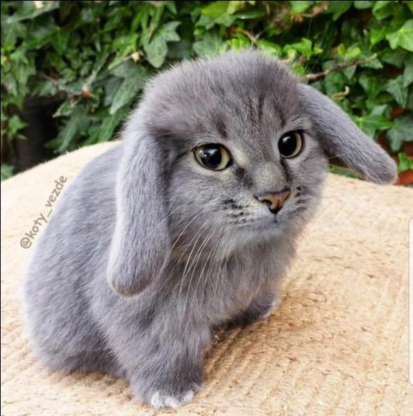 Mignon ce petit lapin non ?