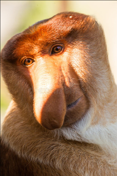 Bien entendu il est absolument impossible qu'un animal pareil existe, à part dans Harry Potter ou Avatar, et encore !