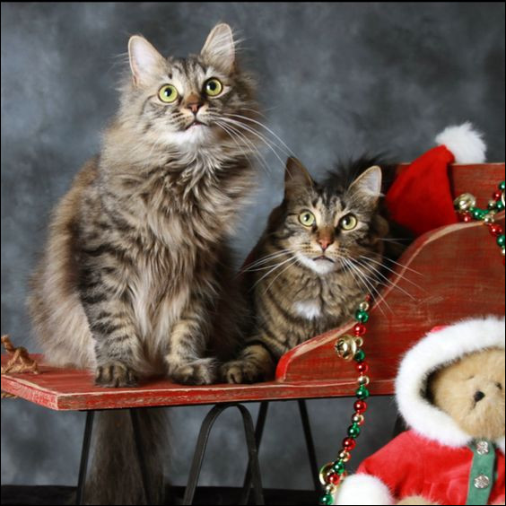 Qu'y a-t-il devant les deux chats ?
