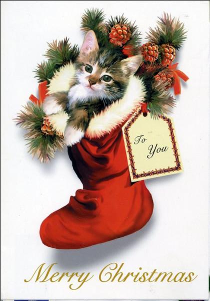 Ce chat fête Noël mais il se demande quelle est la saison de Noël. Peux-tu l'aider ?