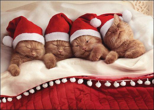 Ces chatons dorment le soir de Noël qu'est-ce qu'ils ont sur la tête ?