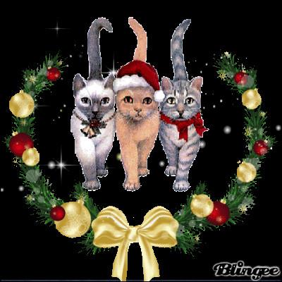 De quoi est composé le collier du chaton à gauche ?