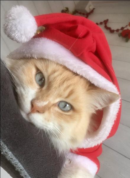Ce chaton a une oreille cachée, mais de quel côté ?