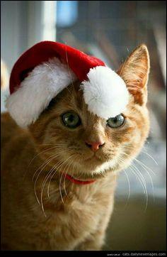 Quel œil le chat a-t-il en entier ?