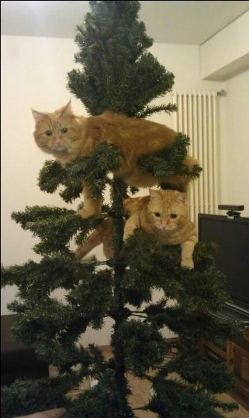 Où sont ces deux chats roux ?
