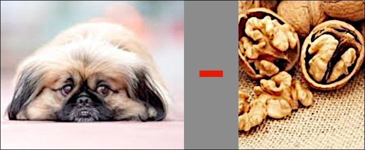 """Une nouveauté, le rébus soustractif : il suffit d'ôter le son après le signe """"moins"""" de ce qui a été trouvé précédemment ! Tout cela, en appelant un chien un chien, bien sûr..."""