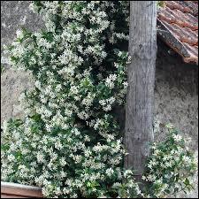 Quel type de plante est-ce ?