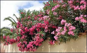Plantes - Persistant ou caduc ? (2)