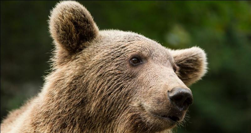 """Que veut dire l'expression """"il ne faut pas vendre la peau de l'ours avant de l'avoir tué"""" ?"""