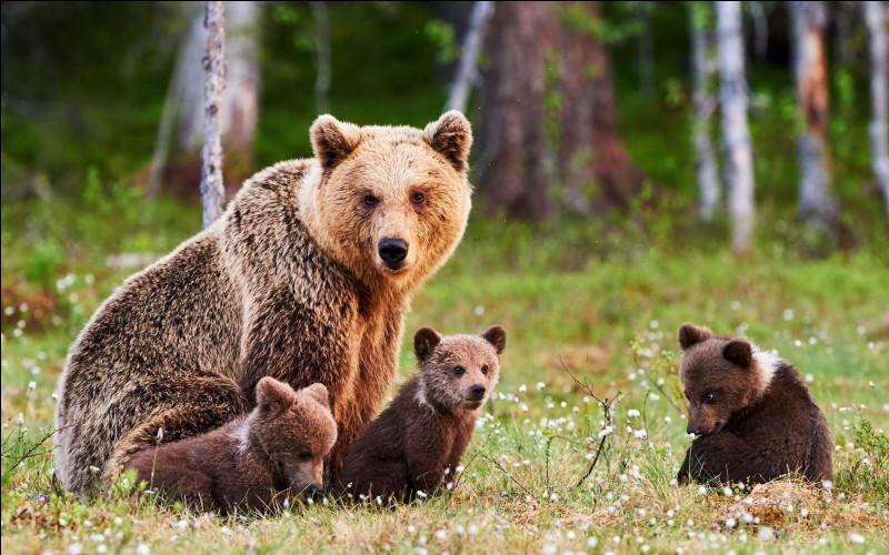 """Que veut dire l'expression """"être comme un ours"""" ?"""