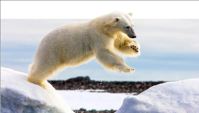 """Que veut dire l'expression """"mettre à l'ours"""" ?"""