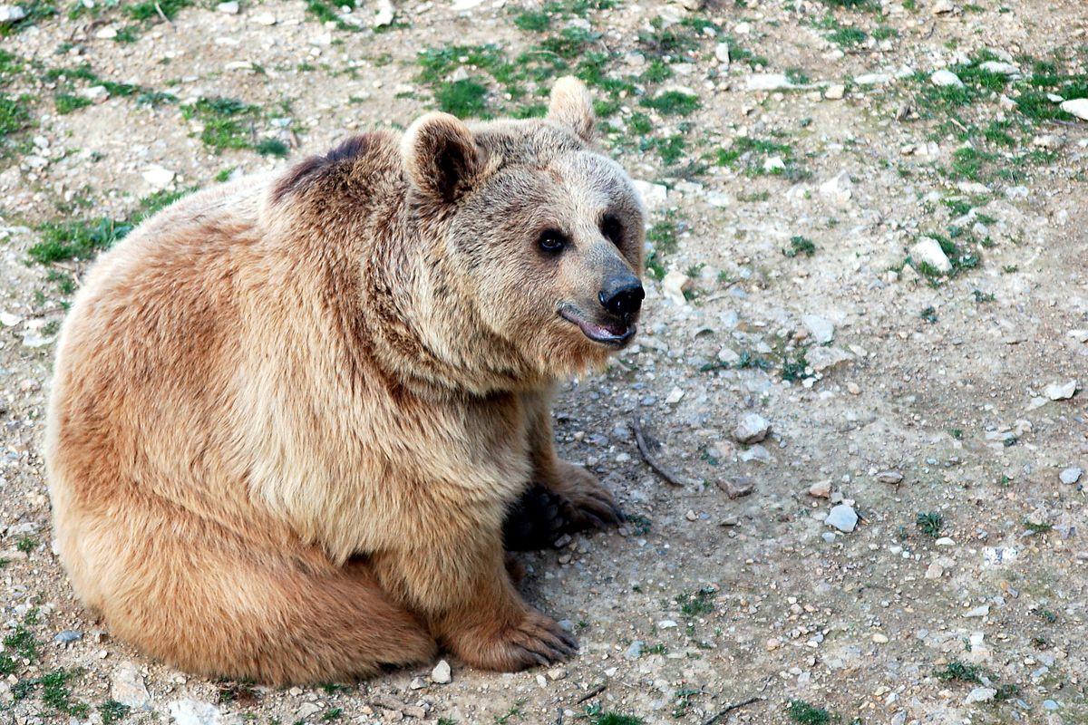 Expressions - Quelques expressions sur l'ours