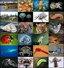 Quel animal ressemble le plus à l'humain ?