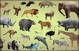 Culture générale sur les animaux