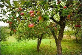Prunus lusitanica est le nom d'un fruitier.