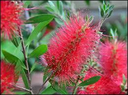 On appelle cette plante le tire-bouchon !