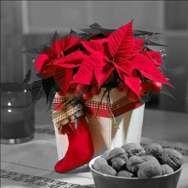 """Voici venue l'heure de l'échange des cadeaux ! Eye a fouillé toute la jardinerie pour offrir cette plante à Ferlie : on l'appelle """"étoile de Noël"""" mais quel est son vrai nom ?"""