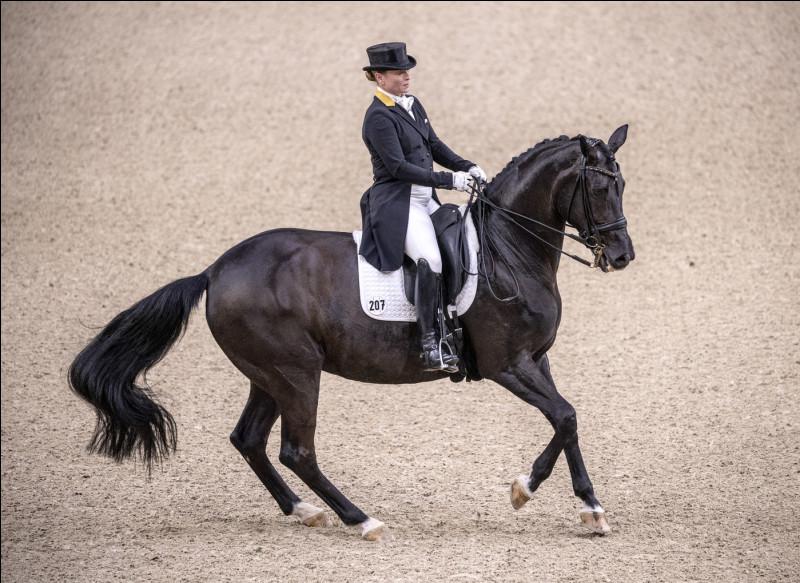 Quel mot ne désigne pas un équipement pour l'équitation ?