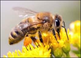 Quel personnage de films possède des vêtements assortis aux abeilles ?