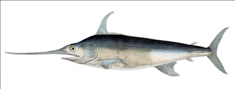 Quel est ce poisson des mers tropicales et tempérées qui a un long rostre ?