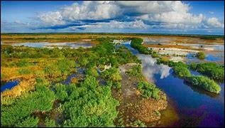 Quelle est cette zone humide subtropicale du sud de la Floride, une écorégion protégée et parc national ?