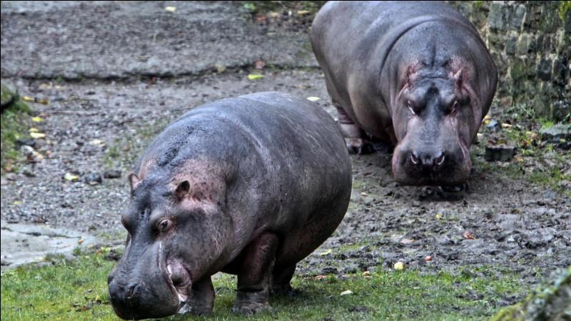 A sa création en 1963, Comment s'appellent les deux hippopotames du zoo de Maubeuge ?