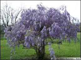 Comment s'appelle cette plante ?