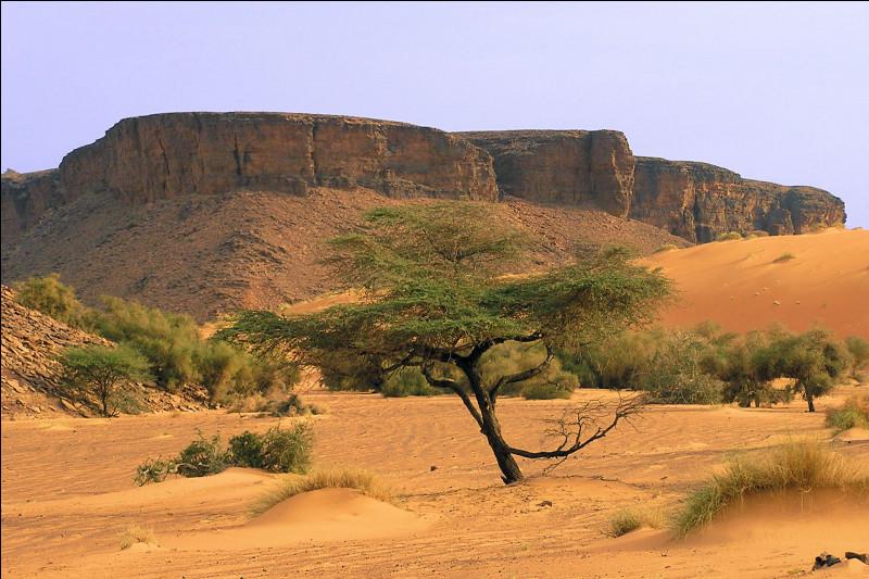 Montagne d'Afrique du Nord :