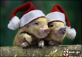 Comment s'appelle le cochon dans un film de Gary Winick ?