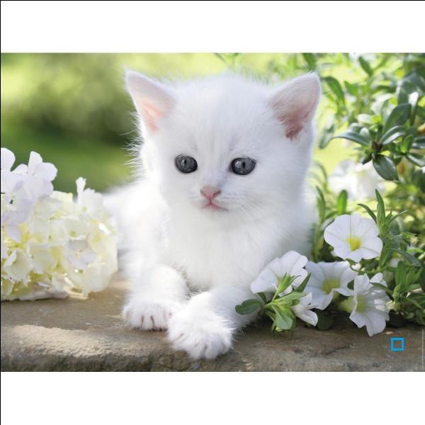 Si tu avais des chatons, combien en aurais-tu ?