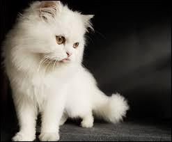 Quel animal est le chat-huant ?