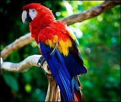 À l'état sauvage, où vit le perroquet Ara ?