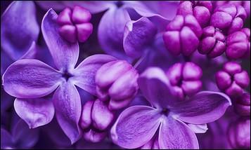 Comment fabrique-t-on du violet ?