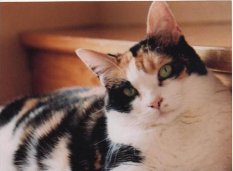 Le chat de Jane99 est tout mignon, vous voulez une question cadeau ? Quelle est la couleur de ses yeux ?