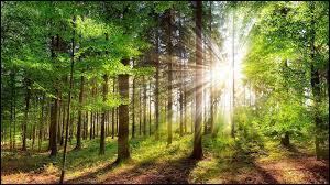 Le boisement ou afforestation consiste à :
