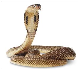 Quel ce serpent au venin extrêmement toxique originaire d'Afrique et d'Asie ?