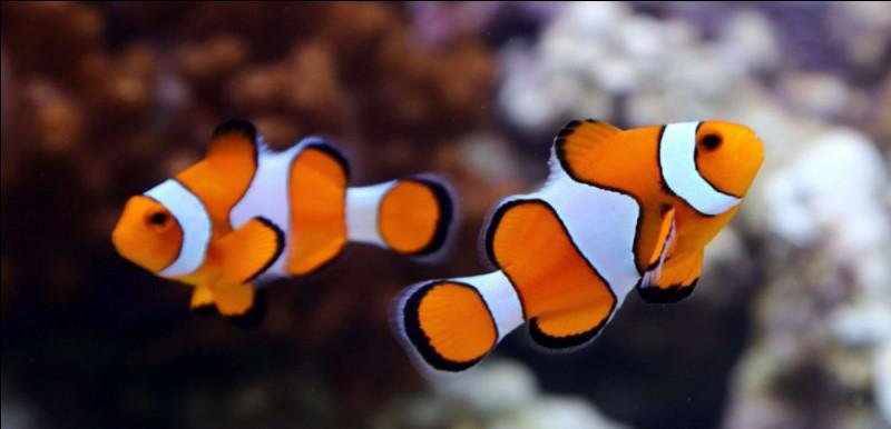 Quel est le nom du bébé du poisson ?